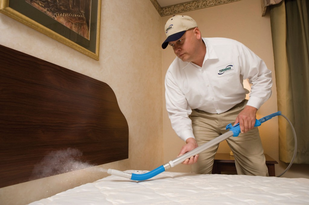 Bed Bug Services Singapore-  What Are Your Choices?