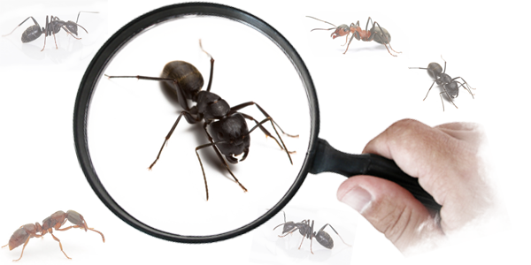 Ant control can be the easiest now